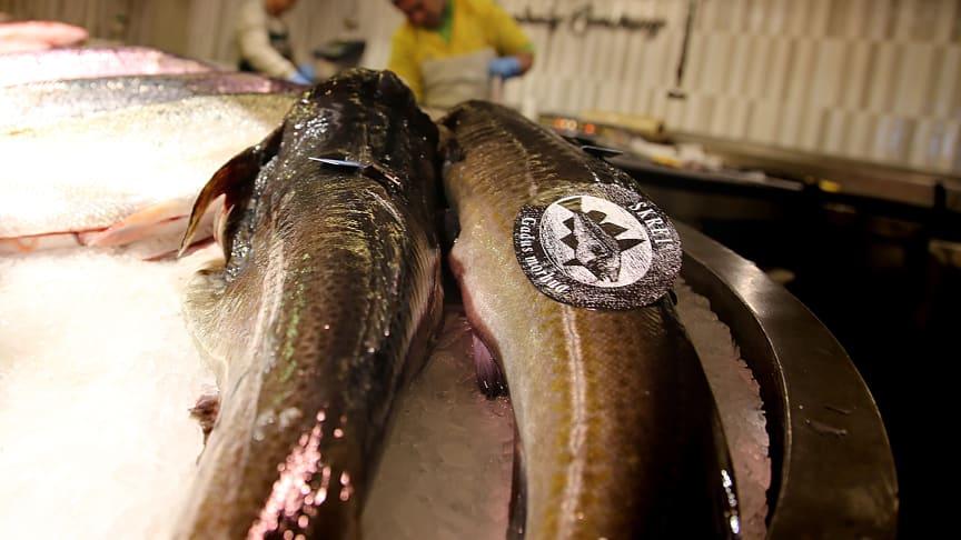 Kvalitetsmerket skrei hos fiskehandler i Madrid