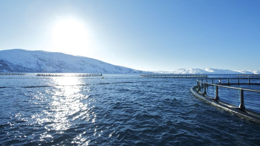 Salmon Exports Increase In Volume and Value