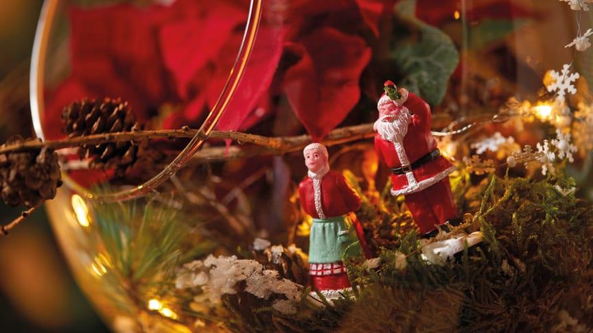 Att skapa miniatyrlandskap med julstjärnor är roligt både för små och stora.