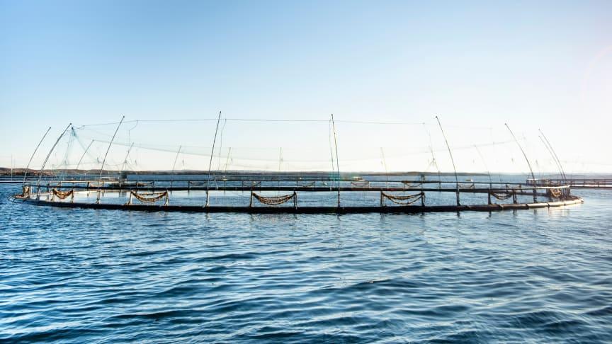 Hvilket potensial har norsk havbruk for kutt i klimagasser? Enova arrangerer webinar rundt dette spørsmålet onsdag 26.mai. Les rapport og meld deg på via Enovas nettsider (Foto: Enova)