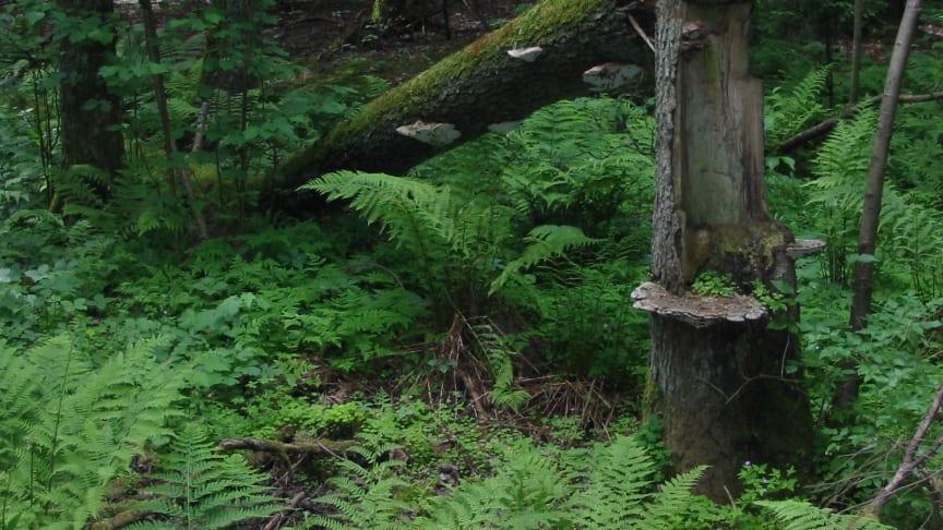 EcoComp är ett nytt verktyg för ekologisk kompensation och kolinlagring i svensk natur som utvecklas av Calluna AB med finansiering från Vinnova.