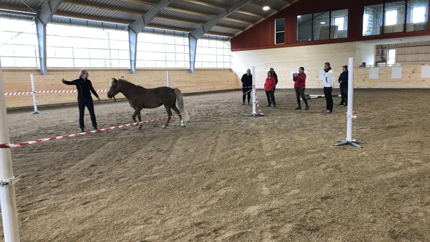 H.A.L.T. - Ledarskapsträning med hästen som coach - Lyngås Gård, Onsala (H.A.L.T Horse Assisted Leadership Training®. )