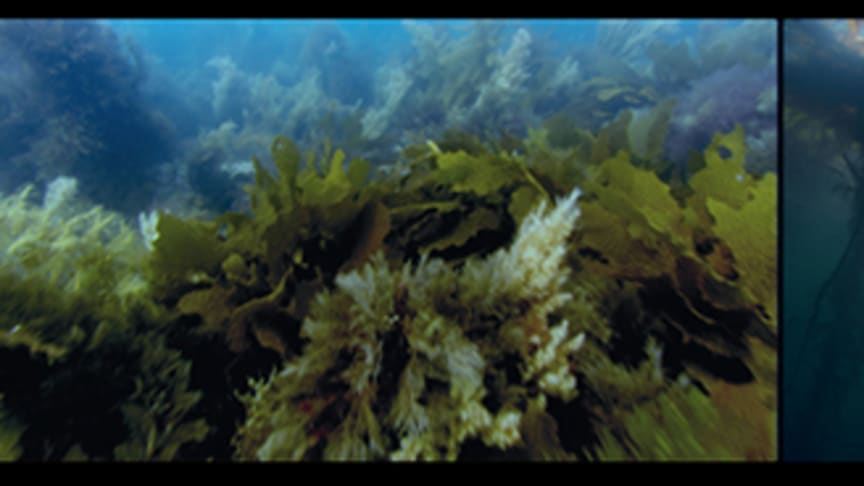 Sverigepremiär Vertigo Sea av John Akomfrah