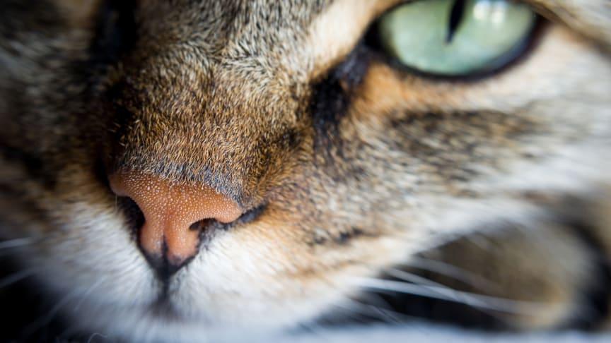 Valget av kjæledyr kan utgjøre en forskjell på tusentalls kroner.