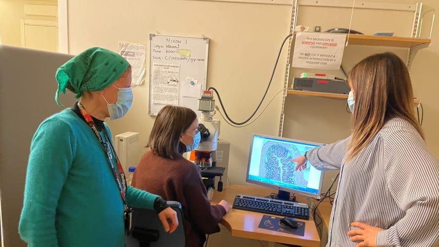 Professor Teresa Frisan, Maria Lopez Chiloeches och Anna Bergonzini tittar på bilder av hematoxylin och eosinfärgning med ljusfältmikroskopi. Foto: Javier Avila-Cariño.