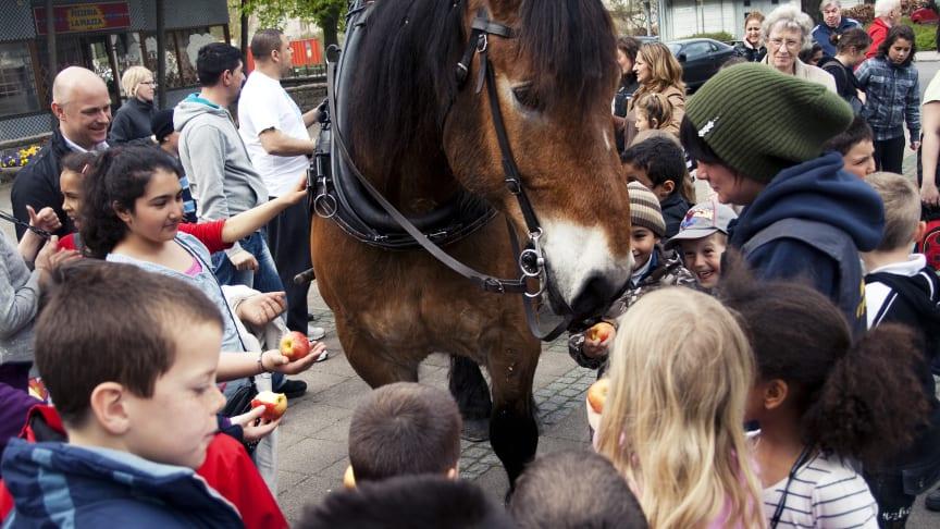 Hästkraft tar hand om sophämtningen i Rosengård