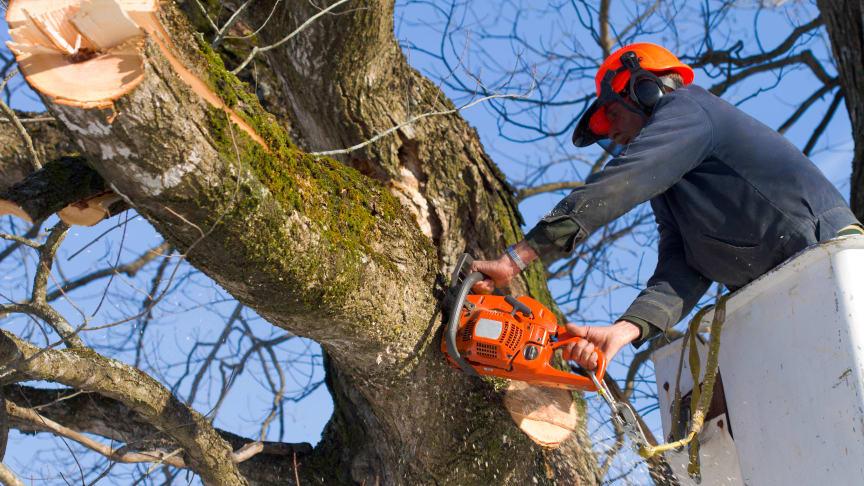 Sikker og effektiv træfældning