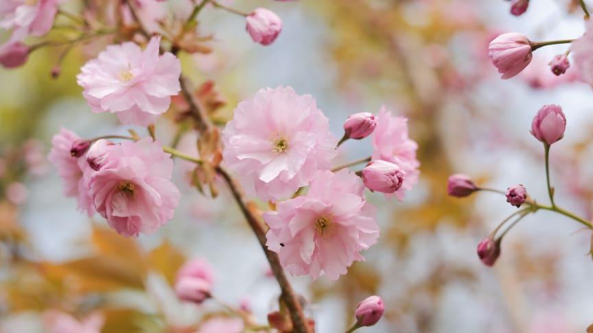 Tips: Börja förbereda inför våren
