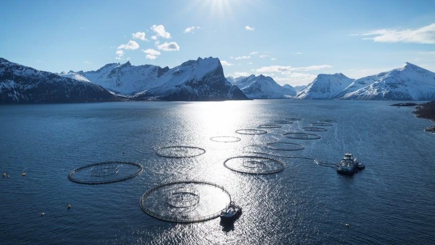 Foto: Norges sjømatråd