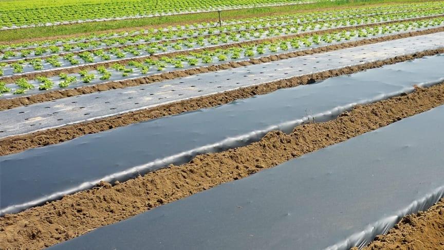 Ny bionedbrytbar marktäckningsduk löser problemet med mikroplaster i jorden