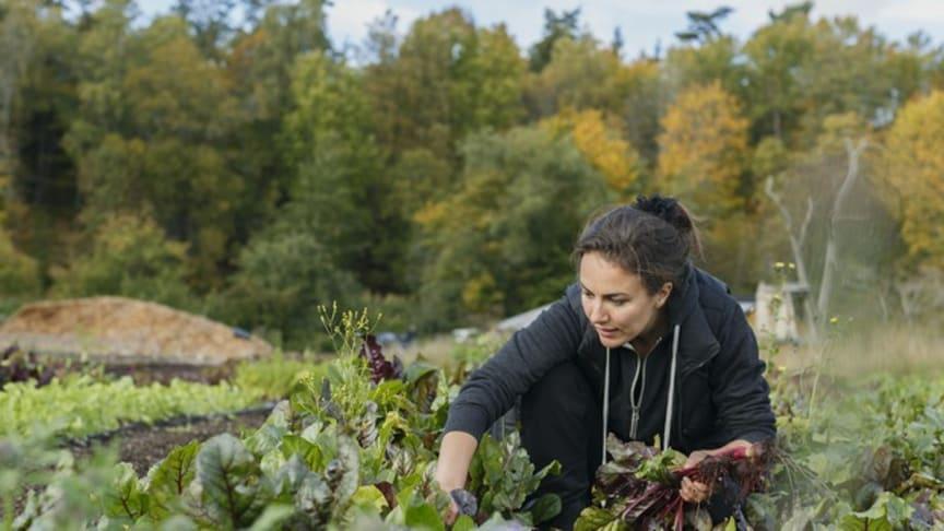 Krångliga regler största hindret för gröna näringar