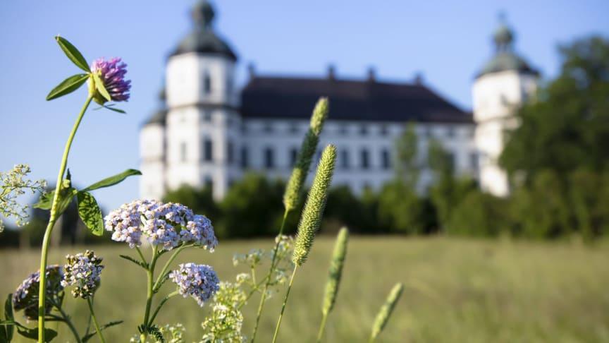 Naturnära utflykt och ett corona-anpassat utbud lockade semesterfirare till Skoklosters slott.