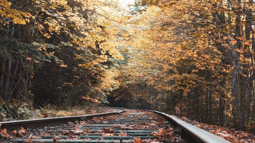Special timetable to tackle Cross City leaf fall