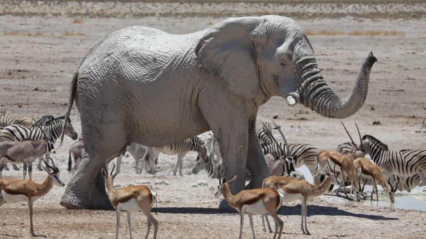 WWF Namibia och Jambo Tours samverkar för rätt och vist resande