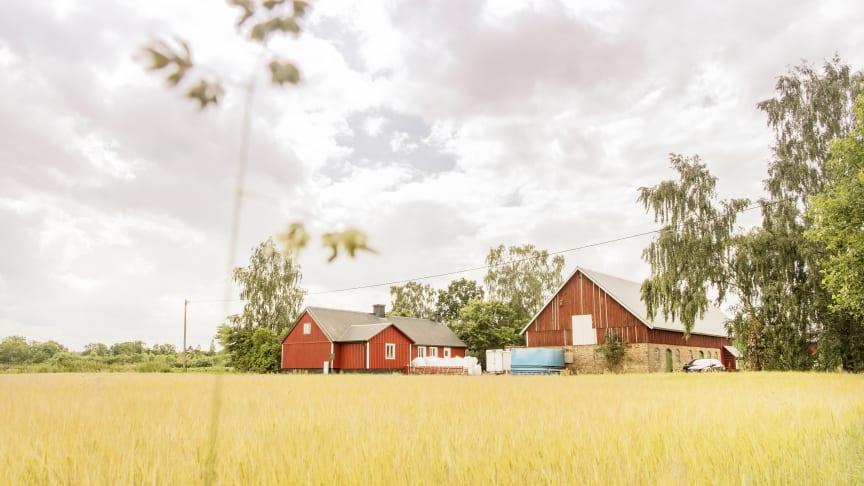 Foto: Gårdsfisk