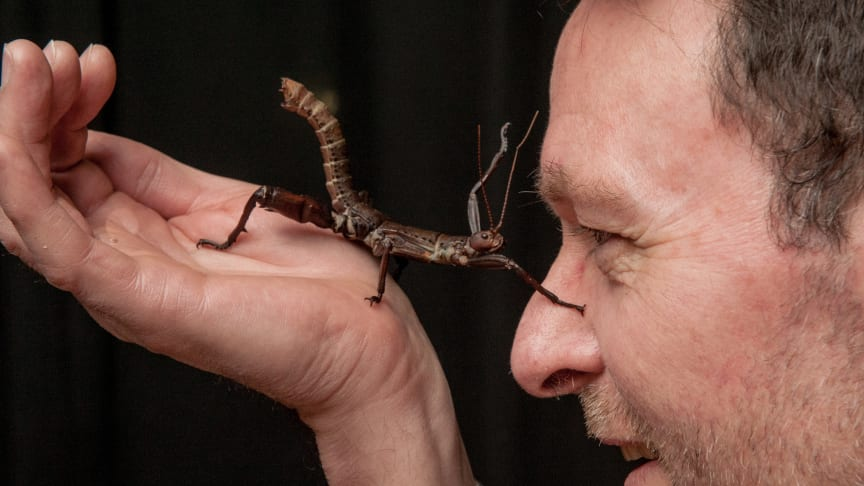 Plants and the Human Brain - Why humans think like insects