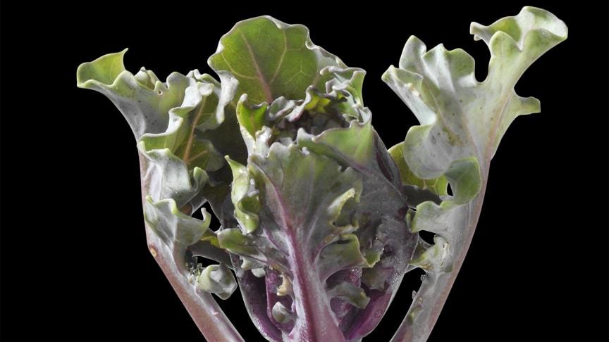 Flower sproutssäsongen drar igång!