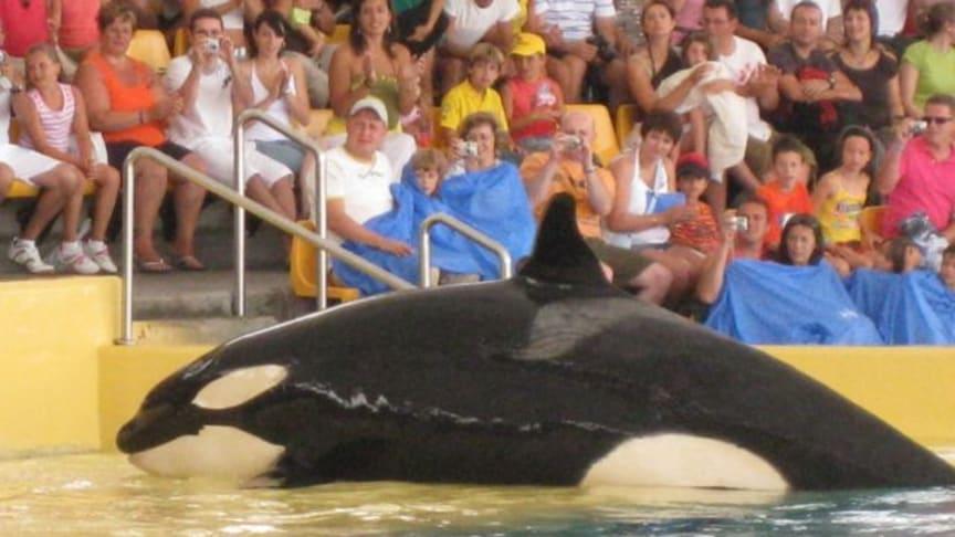 """Delfin- und Orcashows erneut im Reiseveranstalterangebot - """"FTI Touristik lügt wie gedruckt - Boykottaufruf"""""""