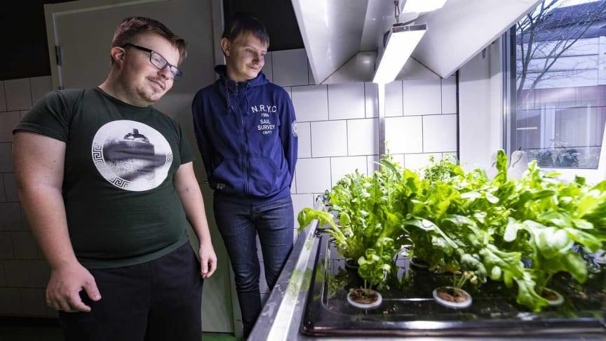 Manel Semiz och Benjamin Klasson är två av eleverna på gymnasiesärskolans hotell- och restaurangprogram som är med och odlar hydroponiskt. Även förskolor i området odlar.
