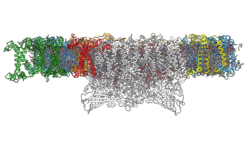 Högupplöst bild av fotosystem II i växten backtrav, framtagen med hjälp av kryoelektronmikroskopi. Bild: Wolfgang Schröder