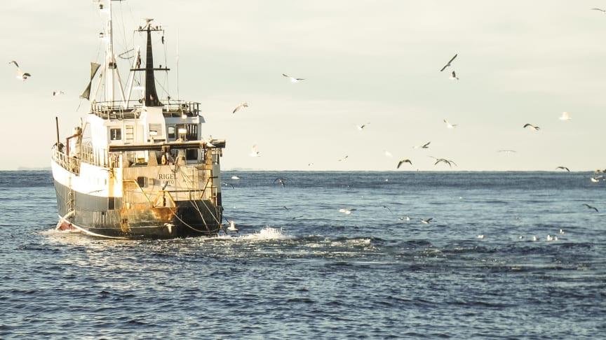 Nya regler kan ge lönsammare räkfiske