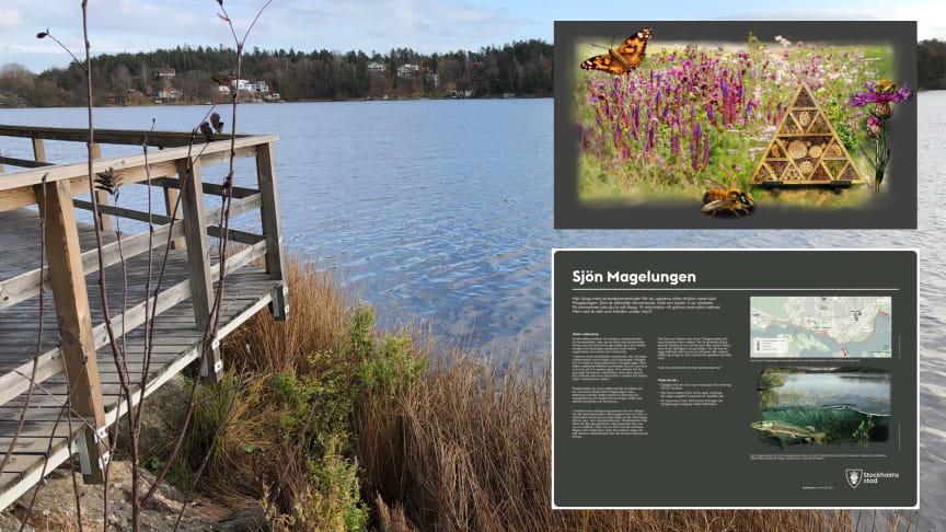 Nybyggda trädäck längs Magelungens strand i Stockholm. De nya informationsskyltar som sätts upp under våren ska berätta för områdets besökare om växt- och djurlivet vid stranden.