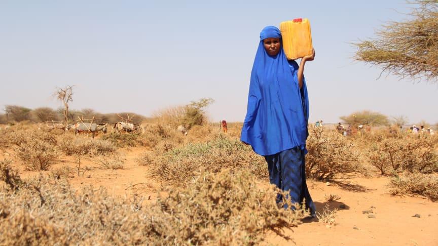 Åttabarnsmamman Hoodo bär hem vatten från Rädda Barnens vattendistribution utanför Burao, Somaliland. Foto:Rädda Barnen