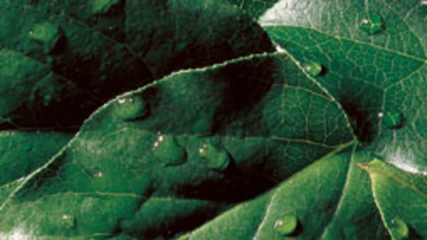 Oras, Grönt byggande och blandare för LEED