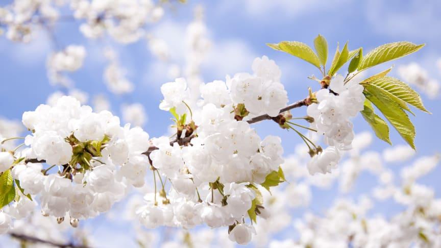 Pressinbjudan: Våren firas in på Jönköping University