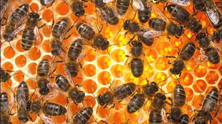 Det surrar om hotellet i Östersund - Bikupor på Scandic för ökad medvetenhet och närproducerad honung