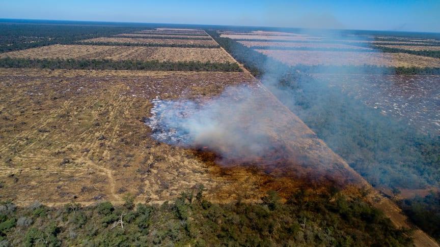 Et savanne-skov område på Chacoen ryddes til fordel for sojaproduktion. Foto: Mighty Earth