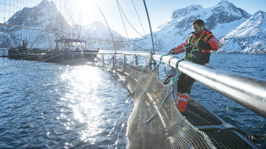 Norwegian salmon farming is among worlds most sustainable protein production
