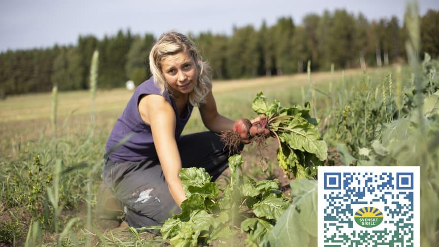 Svenskt Sigill bonden Linnéa Henrysson visar hur arbetet för ökad biologisk mångfald ser ut i praktiken. På potatispåsen finns nu en QR-kod.