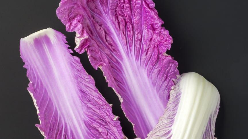 Sallarossa, vacker blomma eller grönsak!?