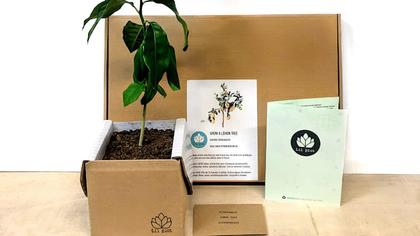 Odla ett eget eukalyptus-, citron- eller granatäppelträd!