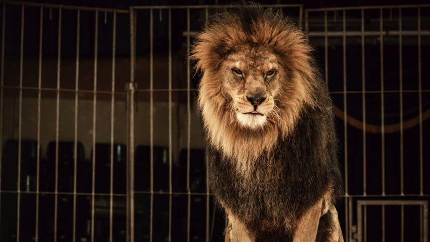 COMMENT: In defence of Britain's last lion tamer