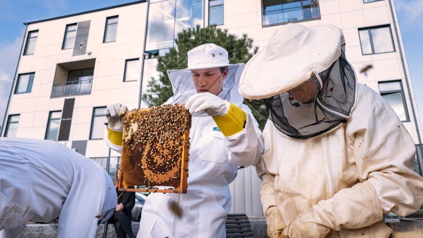 HSB Living Lab och TietoEVRY skapar ett nätverk av uppkopplade bikupor