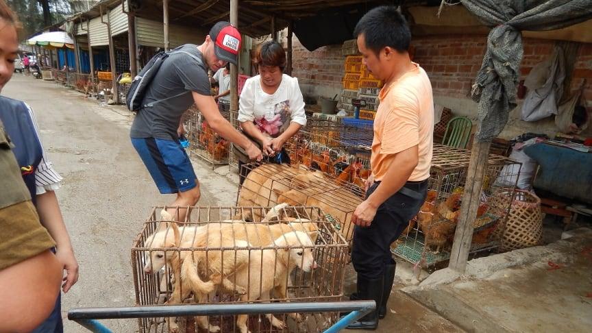 Sebastian Margenfeld mit 7 geretteten Hunden (Förderverein Animal Hope and Wellness e.V.-/ProWal-Foto)