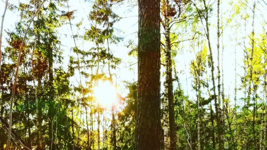 Ett träd som blir glad av solen. Solljus är bra för träd och växter!