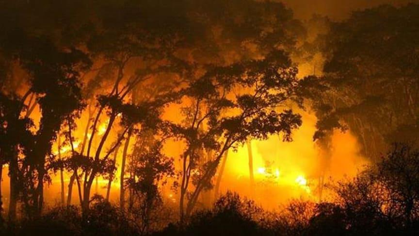 Sidste år brændte enorme områder med tropiske skove i Sydamerika - i år ser det ud til at blive mindst lige så slemt. Foto af CIPCA, Bolivia