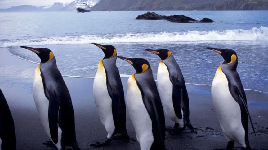 Under symposiet diskuteras bland annat vad som ligger till grund för den svenska närvaron i Antarktis samt hur de största utmaningarna ser ut idag. Fotograf: Steven Zeff/Azote