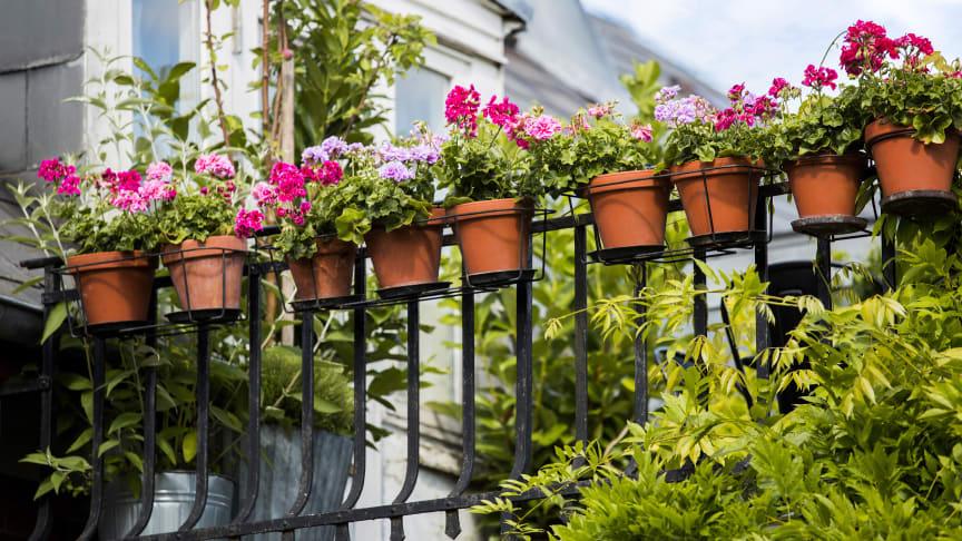 Förvandla din balkong till en blommande oas med hjälp av svenskodlade växter!