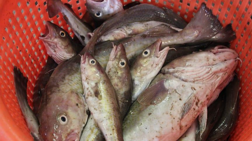 Minskat fisketryck i Europas havsområden