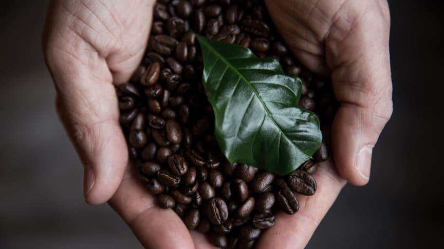 Hur länge håller ditt kaffe?