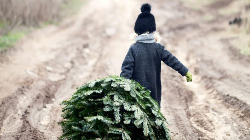 Ensomt juletræ søger gaver