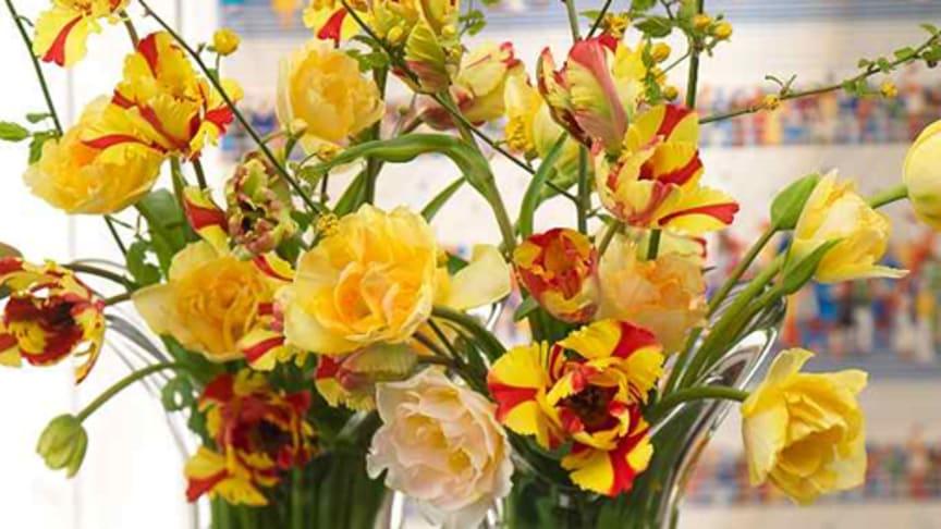 """Påsk – """"musöron"""" och tulpaner i vasen"""