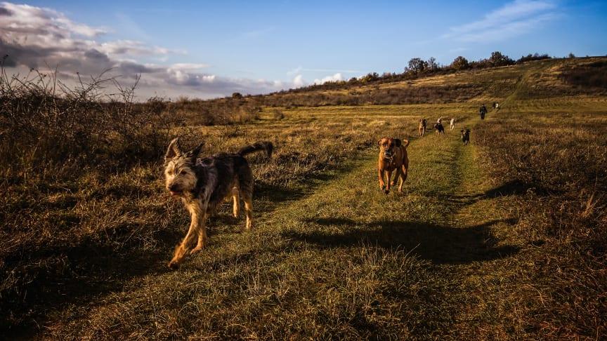Nu lanseras 2288 – Djurens vårdguide – oberoende och kostnadsfri rådgivning för djurägare