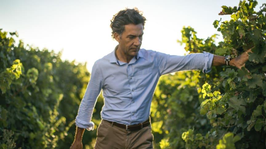 Domaines Paul Mas har närmare 1 000 hektar vingårdar och arbetar för att konvertera alla vingårdar till ekologisk odling till år 2023, alla viner som produceras idag är veganvänliga.