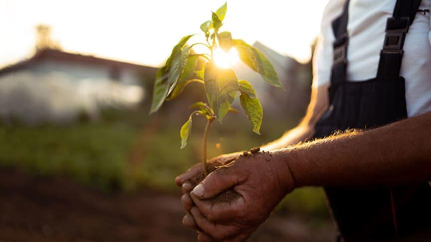 I Smartphotos kampanj planteras ett nytt träd för varje såld fotobok.