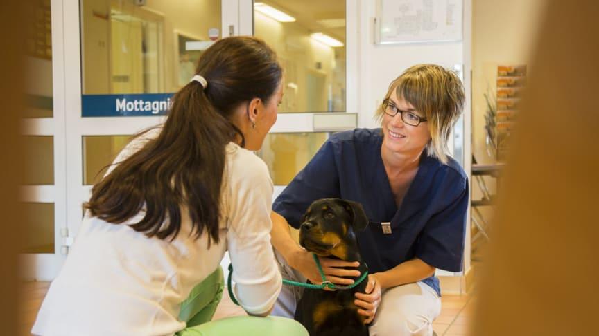 Höjd beredskap på djursjukhusen i påsk